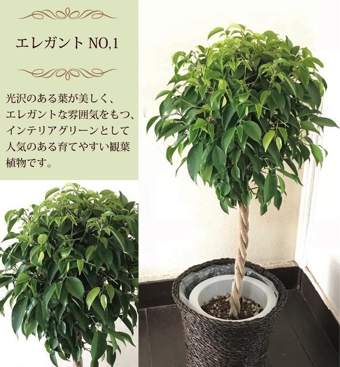foliageplant1